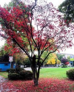Autumn Leaves Zurich