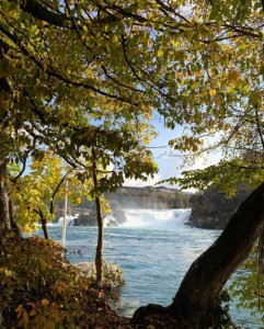 Rhine Falls - Autumn Leaves