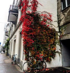 Zurich Autumn