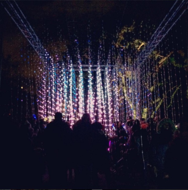 Fairy Lights Shower - Kew Gardens