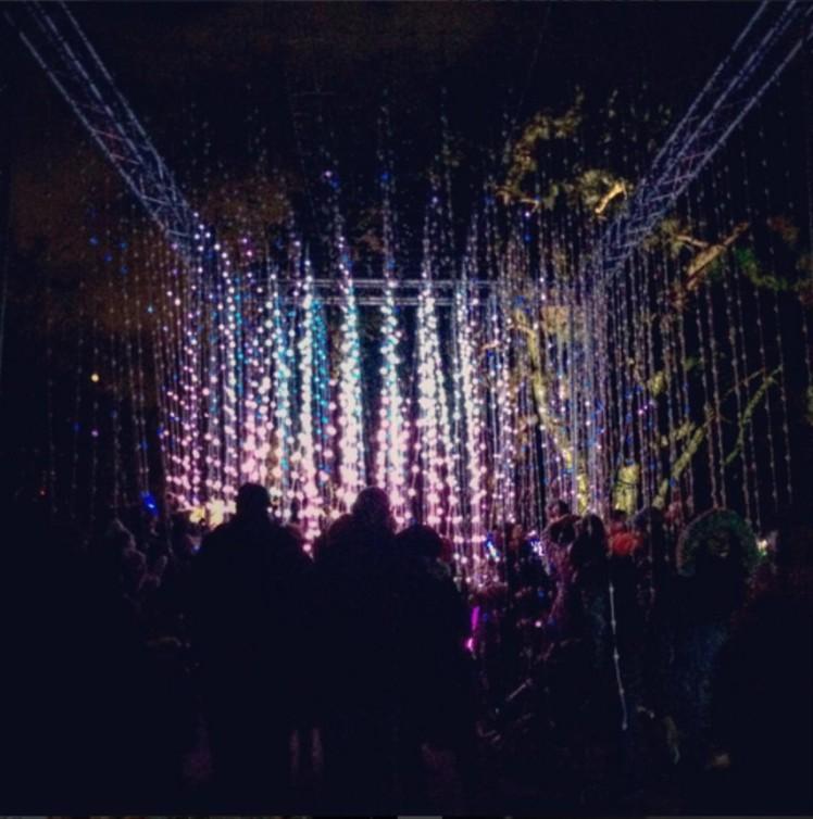 Fairy Lights Shower - Kew Gardens