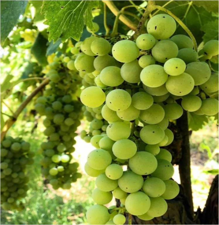 You see grapes, I see wine